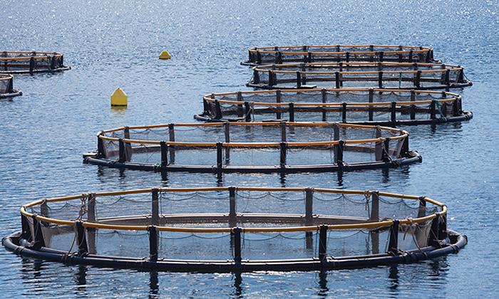 Intelligent Products for Aquaculture Development
